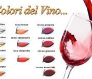I colori del vino – Foto