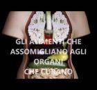 Alimenti che assomigliano agli organi che curano